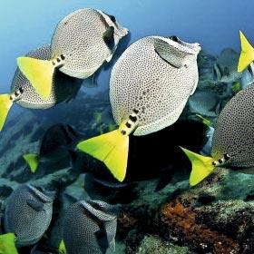 Scuba Diving in Los Cabos