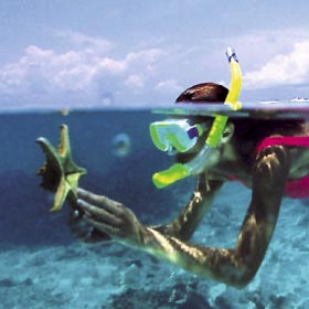 Snorkeling Tours in Los Cabos