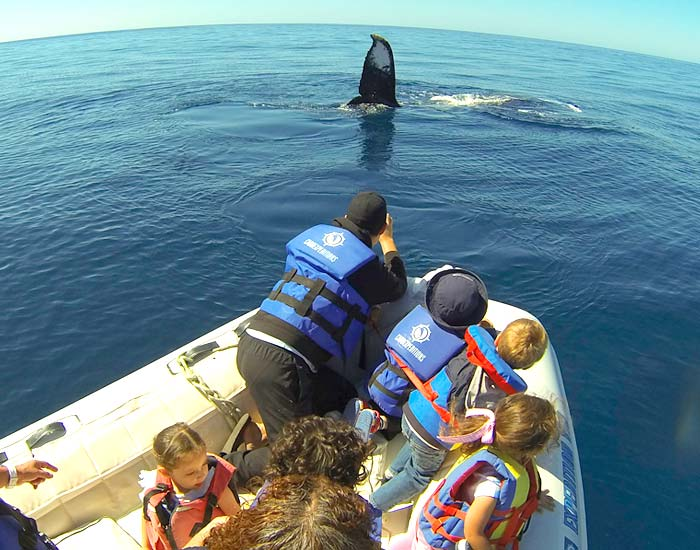 Zodiac Whale Watching Adventure