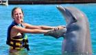 Dolphin Royal Swim