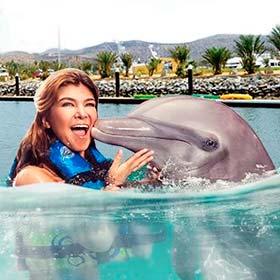 Dolphins Royal Swim in Los Cabos