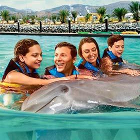 Dolphin Encounter in Los Cabos
