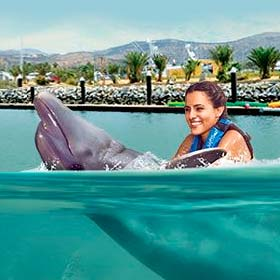 Dolphis swim & Ride l Tours and Activities in Cabo San Lucas