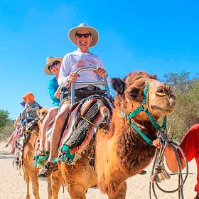 Camel Tours in Los Cabos