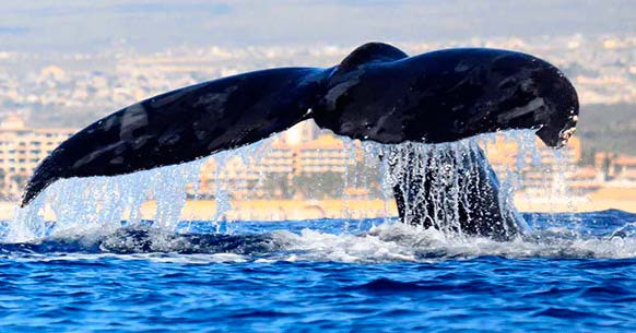 Whale Watching & Breakfast in Cabo