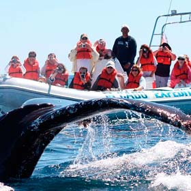Whale Watching l Tours and Activities in Cabo San Lucas