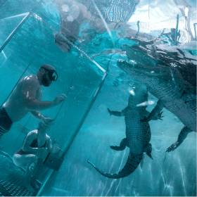 Croc Experience - Swim with Crocodiles in Cabo San Lucas